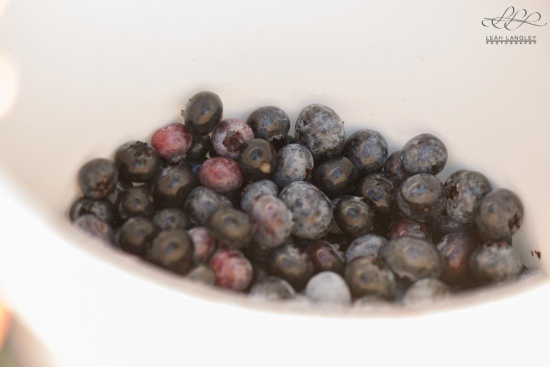 blueberry-121