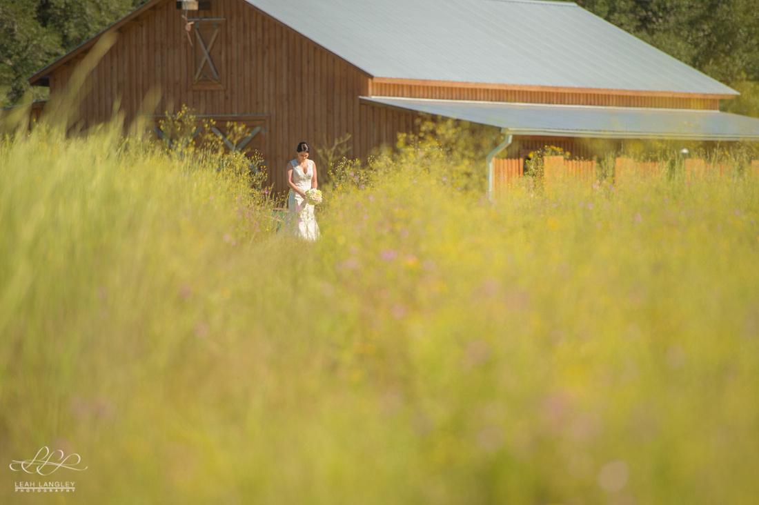 Sage Field Farm-129